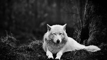 Werewolf Wallpapers Wallpaperplay