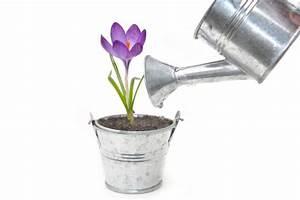 Wann Pflanzt Man Hortensien : krokusse arten wann sollte man krokusse pflanzen ~ Yasmunasinghe.com Haus und Dekorationen