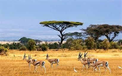 Safari African Wallpapers Background Animals Africa Kenya
