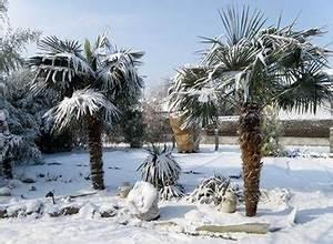 Palmen Kaufen Baumarkt : palmenhandel palmen schartner webseite ~ Orissabook.com Haus und Dekorationen