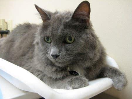 weigh  cat regularly  conscious cat