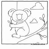 Australia Colouring Coloring Koala Australian Animals Pages Animal Printable Templates Brisbane Sheets Kangaroo Brisbanekids Opossum Flag Koalas Possum Illustrations Jungle sketch template