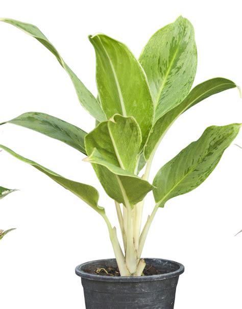 Plant - 6