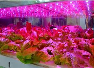 Pflanzen Led Licht : verwenden led wachstumslampen in ihrem garten led blog ~ Markanthonyermac.com Haus und Dekorationen