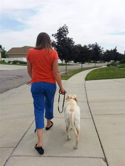 touch dog training utah puppy training wasatch