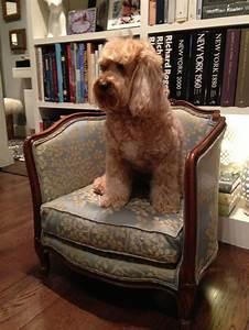 My re upholstered victorian dog bed for Upholstered dog bed