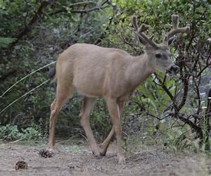 Mild Winter Gives Deer Herds A Bounce