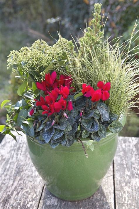 photo  winter outdoor potted plants