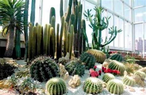 el cuaderno de campo como hacer  jardin de cactus