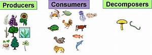 Some Parts of the Food Chain: Producers, Consumers ...