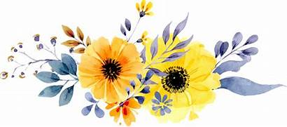 Flower Watercolor Yellow Flowers Daisy Border Painted