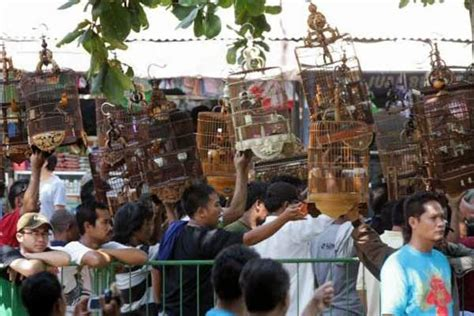 pasar hewan pasty yogyakarta pasar hewan  tanaman hias