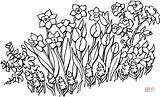Flower Bed Drawing Garden Flowers Coloring Getdrawings Pages sketch template