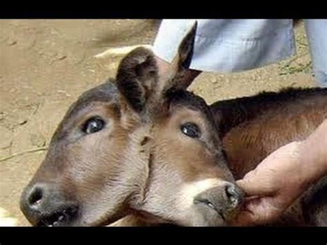 Africa Weird Animals  National Geographic Documentary
