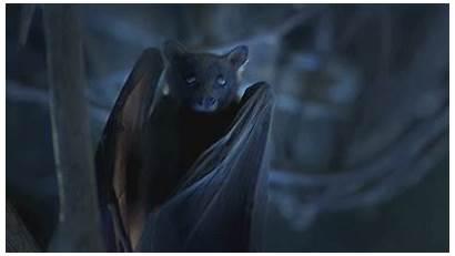 Animal Bat Gifs Animals Animation Amazing Wild