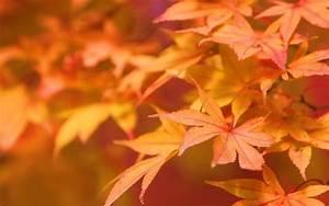 Autumn leaves - Autumn Wallpaper (22177663) - Fanpop