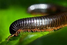Image result for rainforest insects