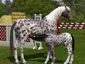 Que Donner A Manger A Un Ecureuil Sauvage : les chevaux avec l addon animaux et cie the daily sims ~ Dallasstarsshop.com Idées de Décoration