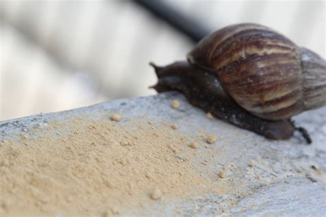 how to get rid of slugs simple ways to get rid of snails wikihow