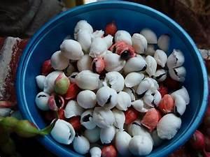 Guamuchiles shelled and ready to eat! :] yum yum yum ...