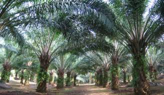 What Is Palm Oil Images