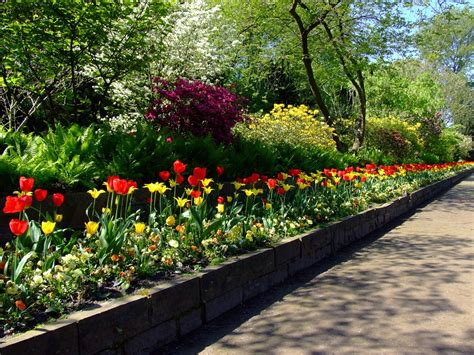 picture garden free photo tulips tulip bed north park free image on pixabay 174596
