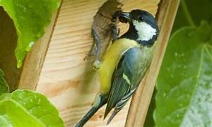 Plan Nichoir Oiseaux : un nichoir pour oiseaux fabriquer nichoir pour les oiseaux ~ Melissatoandfro.com Idées de Décoration