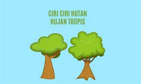 Tips berkemah dalam kondisi cuaca hujan. Ciri ciri Hutan Hujan Tropis dan Persebaran Flora Fauna - Penulis Cilik