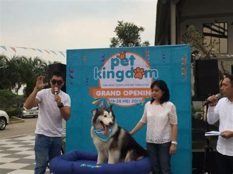 daftar harga pet kingdom alam sutera pets gallery