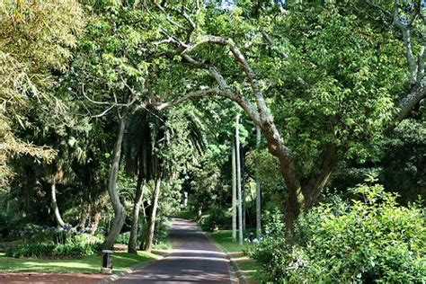Associação dos Amigos do Parque Ecológico do Funchal ...