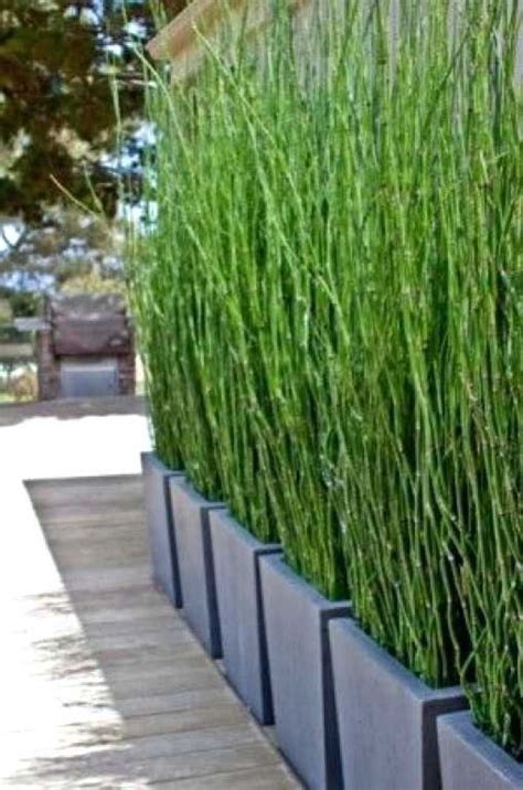 Pflanzen Als Sichtschutz Für Terrasse by Bambus Im Kuebel Bambus Sichtschutz Pflanzen On Wpc