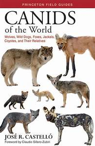 Canids Of The World  Wolves  Wild Dogs  Foxes  Jackals