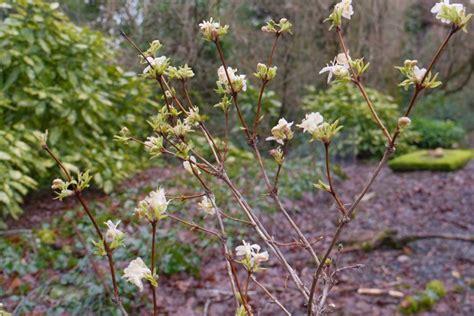 planter du ch 232 vrefeuille en mars dans maison jardin