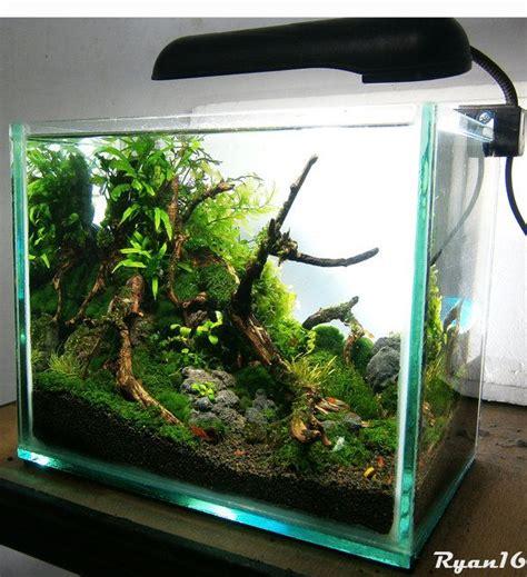 Simple Aquascaping Ideas by My Simple Nano Nano Aquariums Aquatic Plant Central