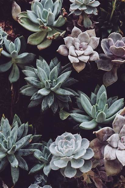Aesthetic Plant Wallpapers Drawings Backgrounds Wallpaperaccess обои