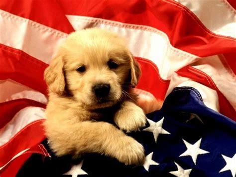 Download Puppies Free Screensaver At Free Download 64