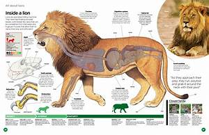 Discover World Of Animals