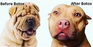 botox for dogs
