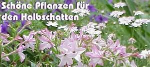 Kübelpflanzen Für Schatten : halbschatten ~ Eleganceandgraceweddings.com Haus und Dekorationen