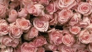 knumathise: Red Roses Tumblr Vintage Images