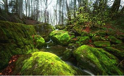 Wallpapers Moss River Trees 2k 4k Forest