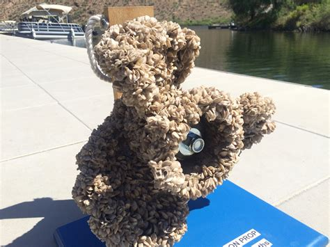 newscom invasive species takes   arizona lakes