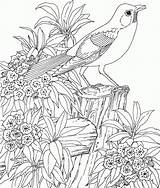 Coloring Flower Garden Pages Print Landscape sketch template
