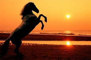 horses in the sunset on the beach | Rearing horse at ...