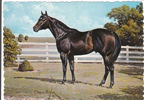 horse quarter horses paintings mixer orren go painting artist gotta race aaa american equine he aqha collectables artwork drawings perfect