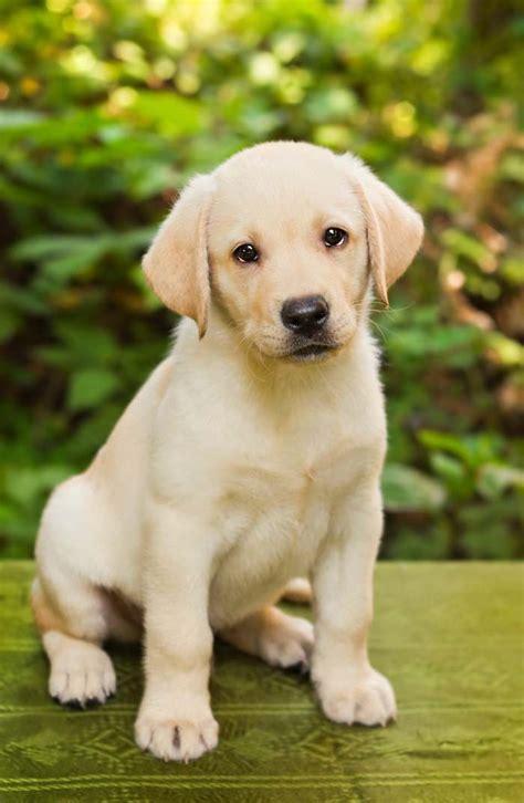 professional dog trainers  colorado animal behavior