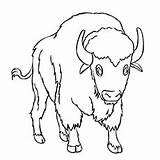 Buffalo Coloring Printable Water Library Indian Visual Similar sketch template