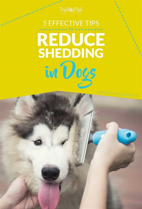 puppy shedding more than usual 5 most effective ways to reduce shedding in dogs