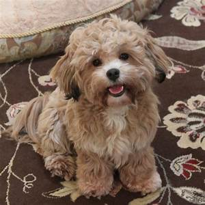 Image Gallery Shichon Information