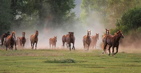 group  fast running brown horses hd animals wallpapers